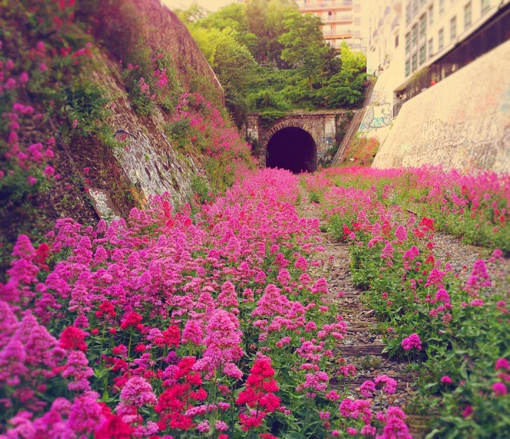 1000x861xpinktunnel.jpg.pagespeed.ic.NIGFQlHraC